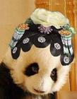 熊猫搞笑图片