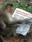 搞笑的猴子