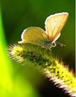 蝴蝶图片大全