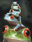 青蛙图片大全