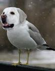 动物搞笑图片