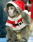 戴圣诞帽的动物图片