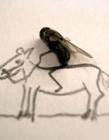苍蝇创意图片