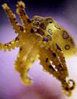 十大恐怖海洋生物图片