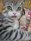 宠物猫图片大全