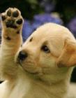 动物打招呼可爱图片