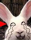 兔子搞笑图片