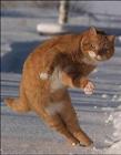 猫搞笑图片