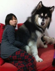 狗与人的搞笑图片