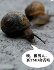 蜗牛搞笑图片