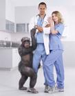 创意动物医院广告
