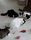 萌猫gif