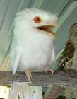 鸟搞笑图片