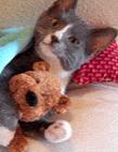 搞笑猫gif动态图片