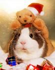 动物圣诞装