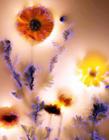 神奇的电离植物影像