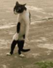 猫动态图片