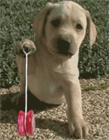狗动态图片
