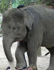 大象搞笑图片