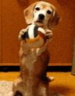 狗的动态图片