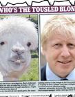 政客与动物表情对比
