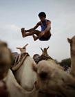 也门举行跳骆驼比赛