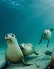 小海狮图片