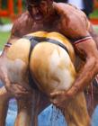 世界肉汤摔跤赛