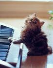 世界上最可爱的猫咪