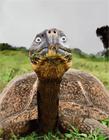 乌龟gif动态图片
