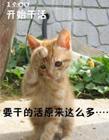 猫咪演绎上班族的一天