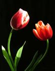 植物情侣的美妙瞬间