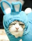 可爱猫图片大全