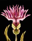 人体拼成的花朵