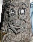 长得酷似人脸的树