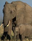 大象搞笑gif动态图片
