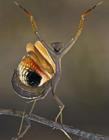 小清新的昆虫们