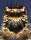 小昆虫高清照