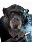 动物吸烟滑稽场面