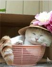 猫的qq表情