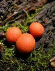 美丽的霉菌图片
