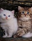 小猫猫的可爱