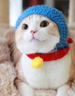 世界上最可爱的猫