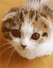 猫搞笑动态图