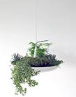 绿色植物吊灯