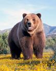 熊gif动态图片