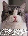 萌猫才是真正的表情帝