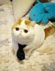 可爱猫咪动态图