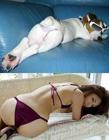 萌狗模仿美女穿衣