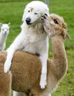 动物间跨越种族的恩爱